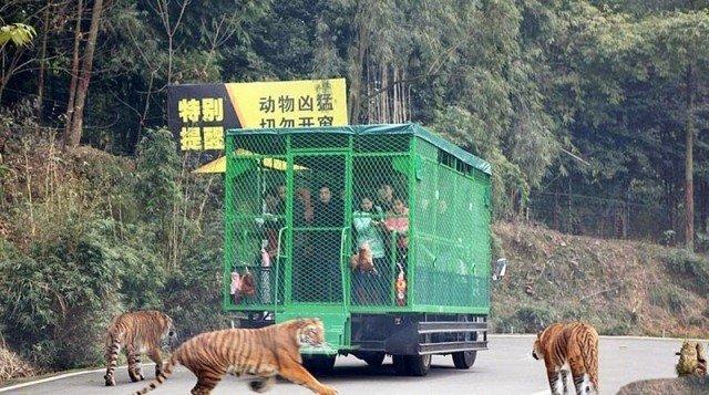 Lehe Ledu Wildlife Zoo ah ganhing te naitak in ki enthei