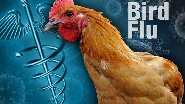 Malaysia, Kelantan sungah H5N1 Bird Flu ki mukhia ~ ZD