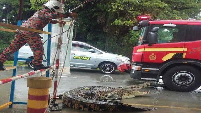 Malaysia, Limbang aom mawtawpei bawlna ah Crocodile khat ki hingmat
