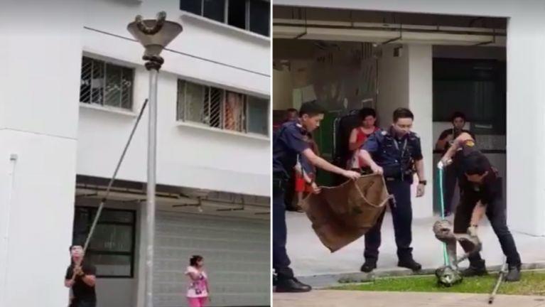 Singapore gamsung meikhuam tungah gul kimu, aki hepkhiatdan kimawhsak