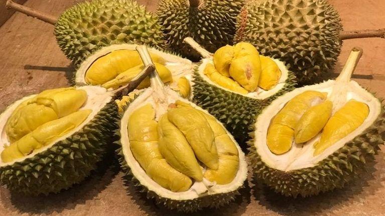 Australia University khatah Durian gimnam pen Gas akeh kisa in mi 500 val kihemkhia