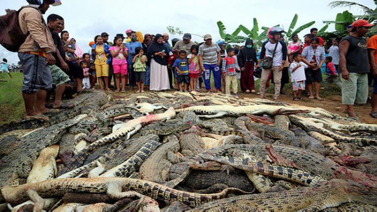 Indonesia ah aphu lakna in khuasung mipi te'n awle 300 dektak thatlum