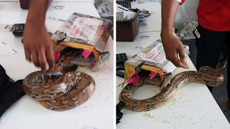Malaysia gamsung akikhak laibung sungah gulpi khat kimu